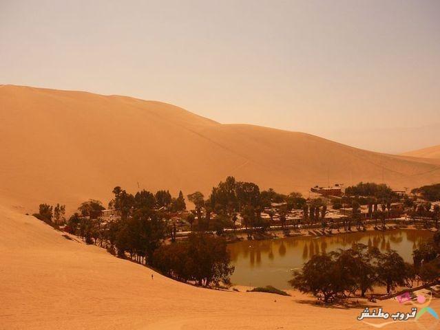 الواحة الخضراء الصحراء